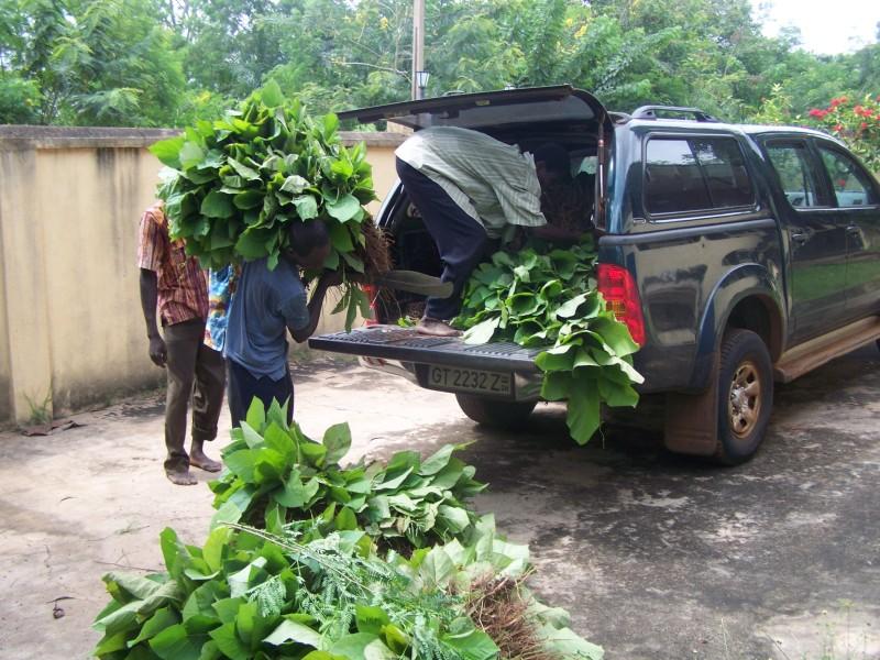 unloading crop